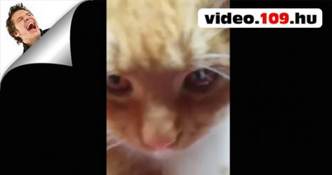 Sanyi A Macska