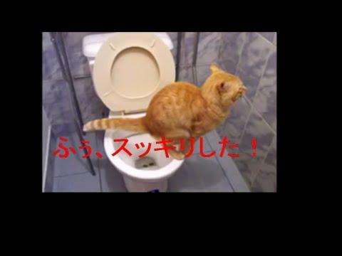 Aranyos macska a mosdóban
