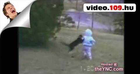 Poénos cicák