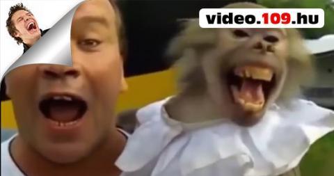Vicces Videó Vicces Állathangok Összeállítása