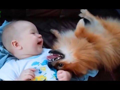 Aranyos Macskák És Kutyák Szeretete Babák Összeállítása 2015 - 2015 Kutyák - Cicák 2015 - 720P