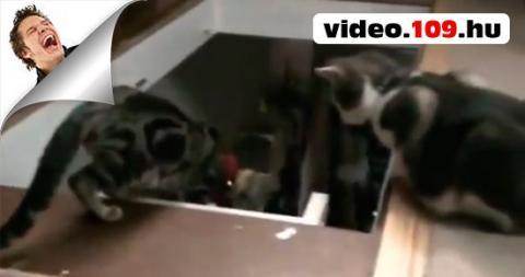 Vicces Cicák Funny Cats