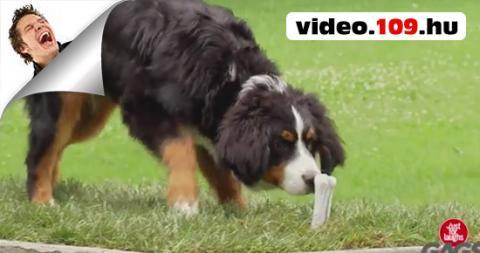 Vicces videó Kutyaütő csínyek