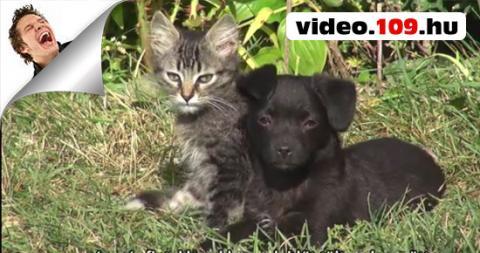Kutya és Macska összeszoktatása