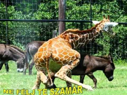 Bolondozó állatok