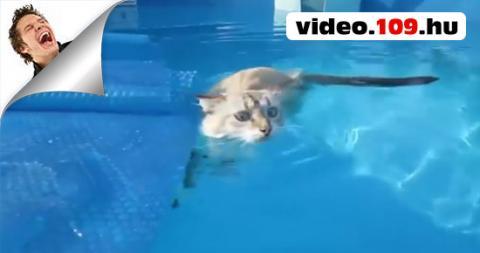 Cicák, akik szeretik a vizet