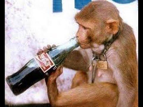 Intelligens majom