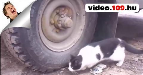 Bűnöző egér Vs cica