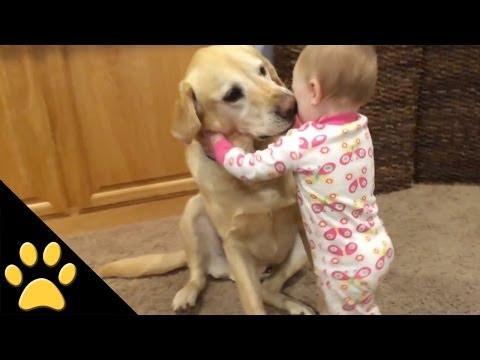 Aranyos kutyák és imádnivaló babák kapcsolata
