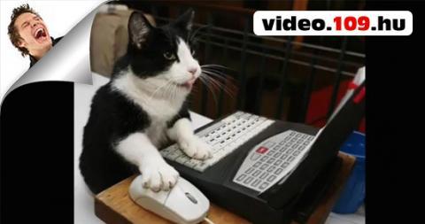 Vicces Kutyák,cicák állatok :)