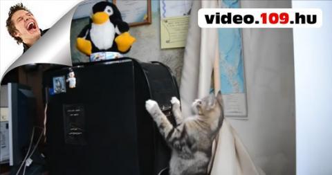 Vicces Macskák Gyűjtemény 2 (Funny Cats Compilation 2)