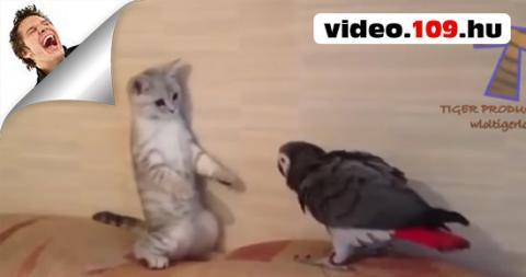 Macskák És Kutyák Vs Papagájok - Vicces És Aranyos Állat videók Összeállítása