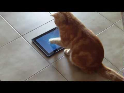 Ipad-al játszó cica.