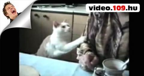 Humoros Macskák