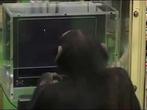 A legintelligensebb majom