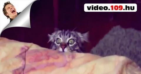 Vicces cicák