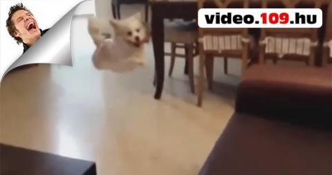 Állatos videók