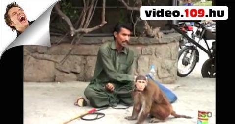 Vicces videó : Intelligens majom emberek szórakoztatása