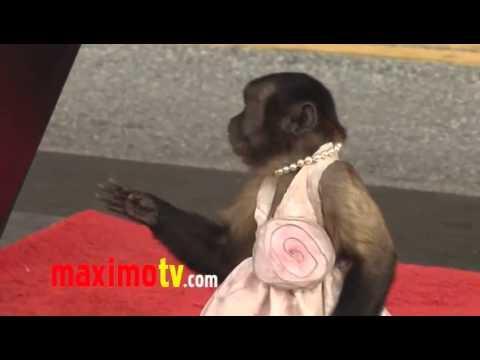 Nagyon intelligens majom !!